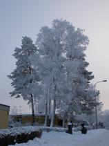 2010-01-13/DSCN5587.JPG
